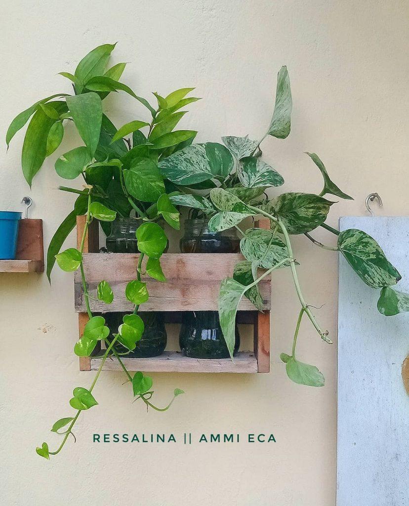 dekor taman minimalis